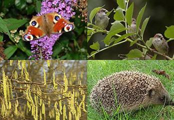 Biodiversiteit stimuleren in een speeltuin