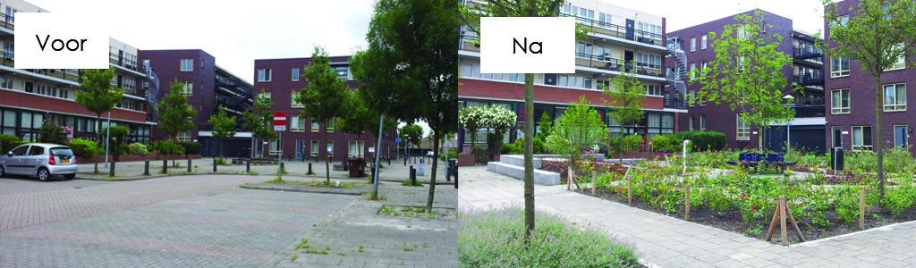 Gebiedsontwikkeling NatureBasedSolution Vergroening co-creatie