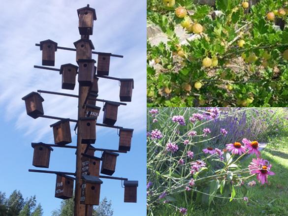 omgevingskwaliteit-tijdelijke-terrein-meervoudige-waardecreatie-biodiversiteit