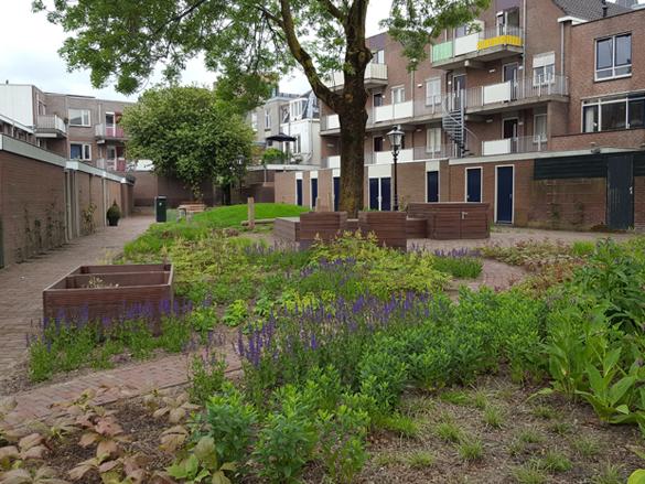Co-creatie bewonersparticipatie biodiversiteit binnentuin stadscentrum