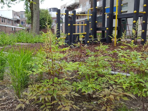 Co-creatie bewonersparticipatie hergebruik biodiversiteit binnentuin stadscentrum